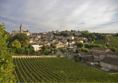 Vineyard at St. Emillion